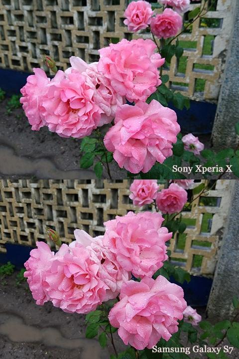 """""""Đọ trình"""" camera của Sony Xperia X và Samsung Galaxy S7 - 143100"""