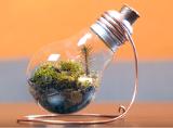 5 phút trồng cây trong bóng đèn cực đơn giản, đừng bỏ lỡ